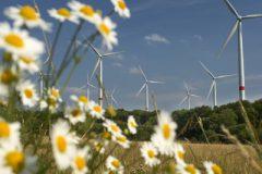 """2005/07/16:Waigandshain:Germany/Deutschland:Rheinland Pfalz - Auf der Fuchskaute, Hoher Westerwald, mit 657 Meter die hoechste Erhebung im Westerwald und beliebtes Ausflugsziel fuer Touristen, Wanderer,  hat die Fuhrlaender AG zusammen mit dem regionalen Energieversorger KEVAG 12 Windkraftanlagen mit jeweils 1, 5 MW Megawatt Leistung errichtet. Margariten/ Blumen im Vordergrund.  Wind power facility in the """"Westerwald"""" run by the Fuhrlaender AG together with local energy supplier KEVAG. 12 wind turbines, each producing 1,5 MW. Flowers in the foreground.     ©Paul Langrock/Zenit/Greenpeace - 0518402 - (◊◊◊)"""